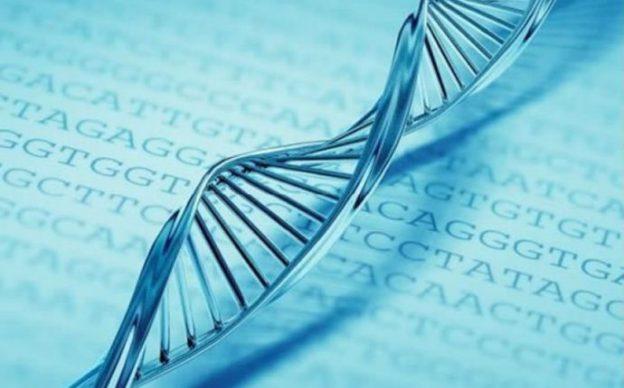 bioetica-qualidade-finalidade-caracteristicas-da-bioetica-brasileira-690x430